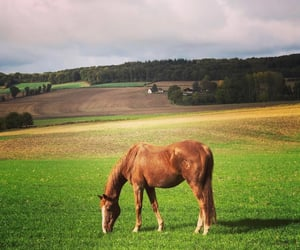 animal, brown, and horse image