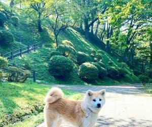 akita, japan, and instagram image
