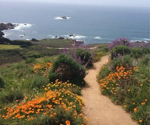 sea, flowers, and nature image