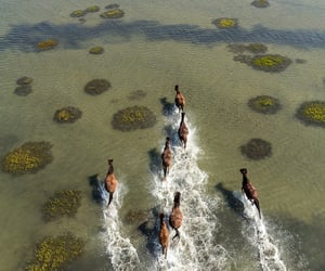 North Carolina, running free, and wild horses image