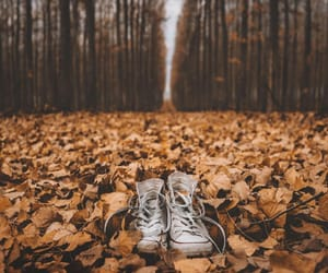 autumn, converse, and nature image