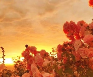 aesthetic, flowers, and golden hour image