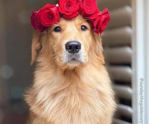 cute dog, dogs, and adorable dog image