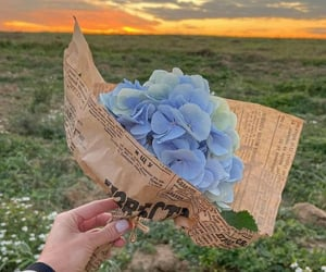 flowers, gift, and surprise image