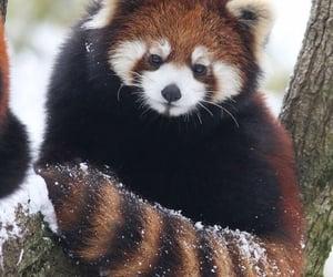 amazing, animal, and awesome image