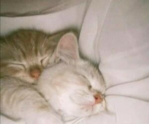 cat, cute, and soft image