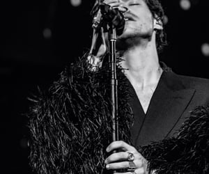 black and white, Harry Styles, and love on tour image