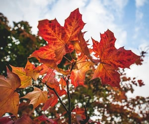 autumn, color, and red image