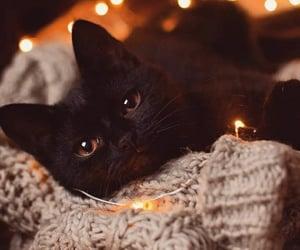 animals, autumn, and black image
