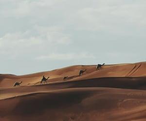 شتاءً and بر image