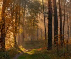 Autumn path by Marat Akhmetvaleev  •
