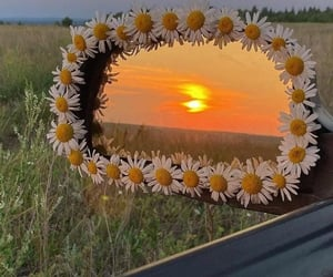 car, papatya, and flowers image