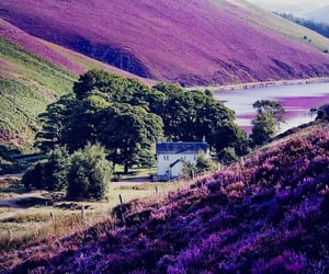 beautiful place, nature, and violet image