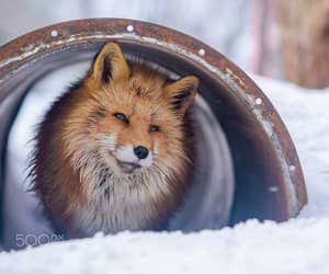 animal, photography, and winter image