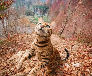 Animales, animals, and autumn image