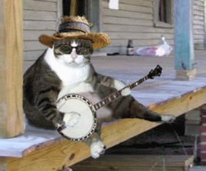 funny and redneck cat image