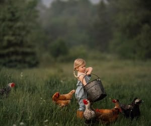 chickens, pic, and portrait image