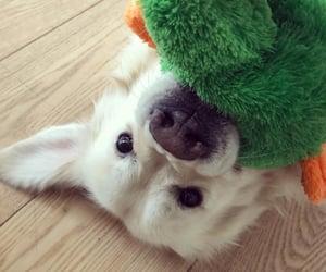 animal, dog, and friend image