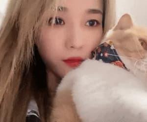 cat, xu chuwen, and cats image