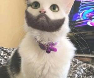 no photoshopped kitty and genetics gang !! image