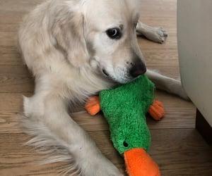animal, game, and dog image