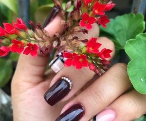 flowers, photography, and uñas image