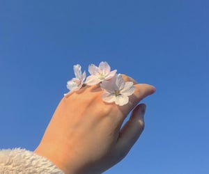 flowers, hand, and sky image