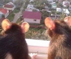 rats and rats inlove image