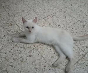 animal, حيوانات, and cat image