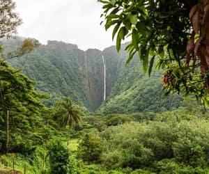 hawaii, trees, and water image