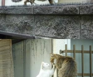 the most romantic tom, tom cat love, and outta it i will not go image