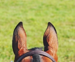freedom, photography, and horse image