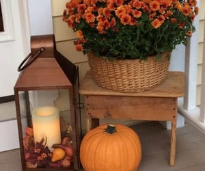autumn, pumpkin, and flowers image