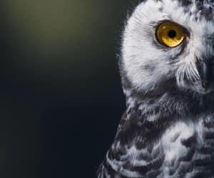 animals, bird, and owl image