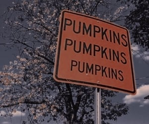 article, autumn, and pumpkin image