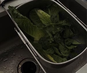 eating, green, and lettuce image