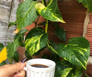 coffee, green, and nature image