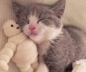 cat, kitten, and kittys image