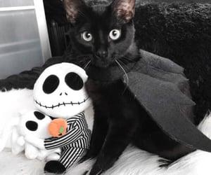black cat, Halloween, and kitten image