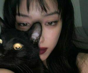 aesthetic, asian, and cat image