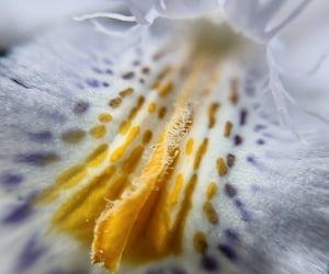 close, flower, and naturaleza image