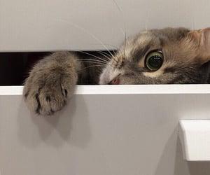 cat, cats, and pet image