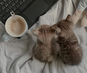 animals, kitty, and coffee image