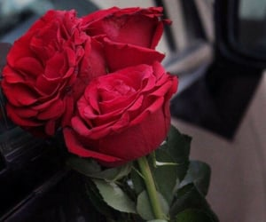 dz, rose, and love image