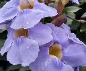 flower flor lilás purple image