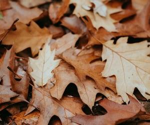 autumn, fall, and fallinlove image