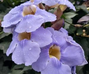 flor flower lilas purple image