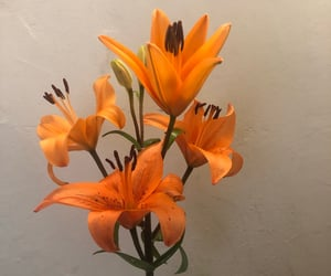 aesthetic, nature, and orange image