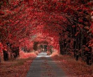 autumn, nature, and orange image