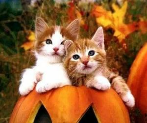 cat, pumpkin, and kitten image